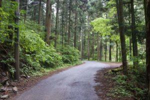 大岳鍾乳洞までの道
