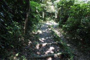 大楠山からの下山