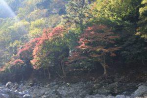 保津川からの景色